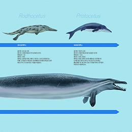 5500만 년 전, 한 동물이 바다로 향했다