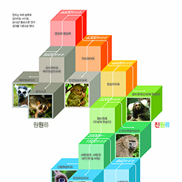 영장류 진화 6500만 년