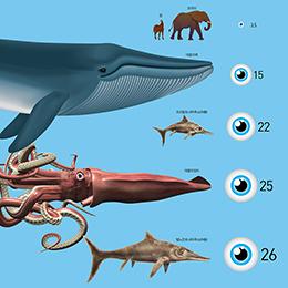 동물 역사상 가장 큰 눈을 가졌던 어룡