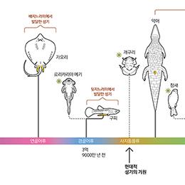 수컷 성기의 진화사