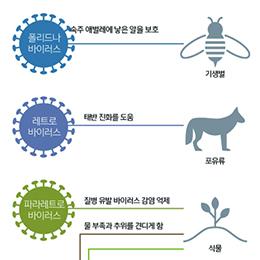 숙주와 공생하는 바이러스