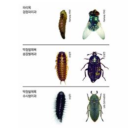 사체에서 많이 나오는 곤충