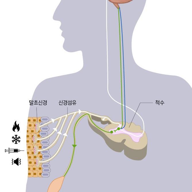 촉각이 전달되는 과정