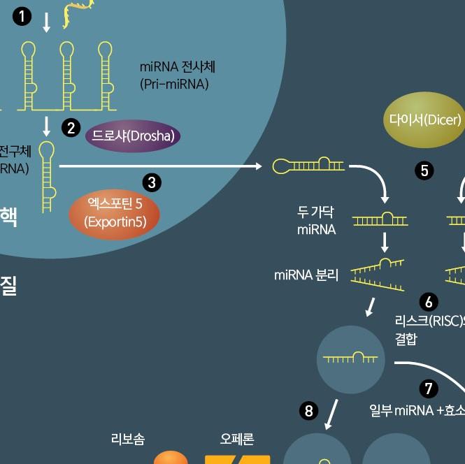 RNA 간섭 현상이 일어나는 과정