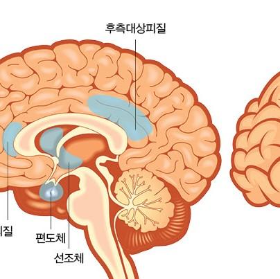 뇌파를 보면 뇌를 안다
