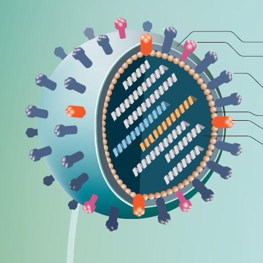 인플루엔자바이러스 감염 원리