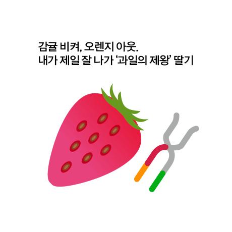 딸기 전통 교배, 분자 육종 비교