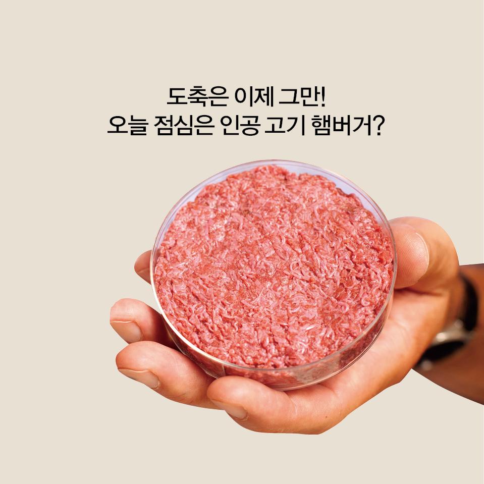 조직 배양 기술로 햄버거 패티 만드는 법