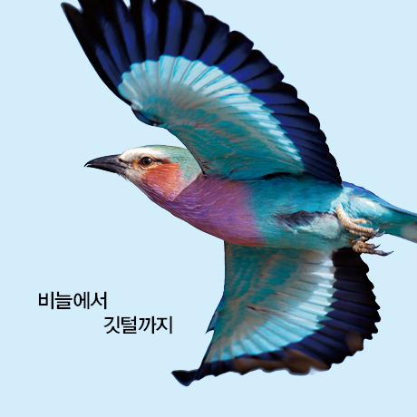 깃털의 진화