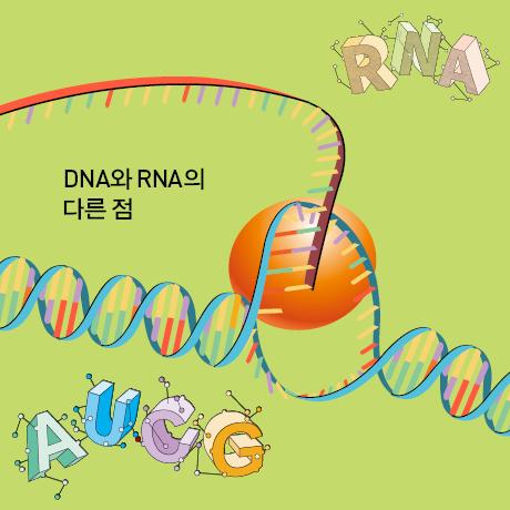DNA와 RNA의 다른 점
