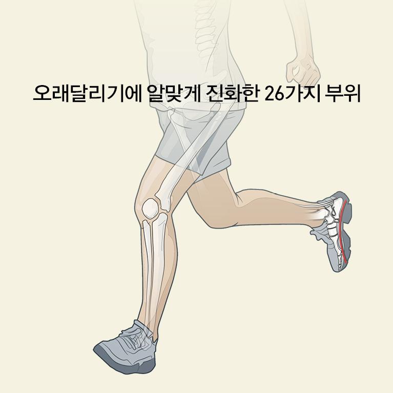 내 안의 달리기 본능(신체부위)