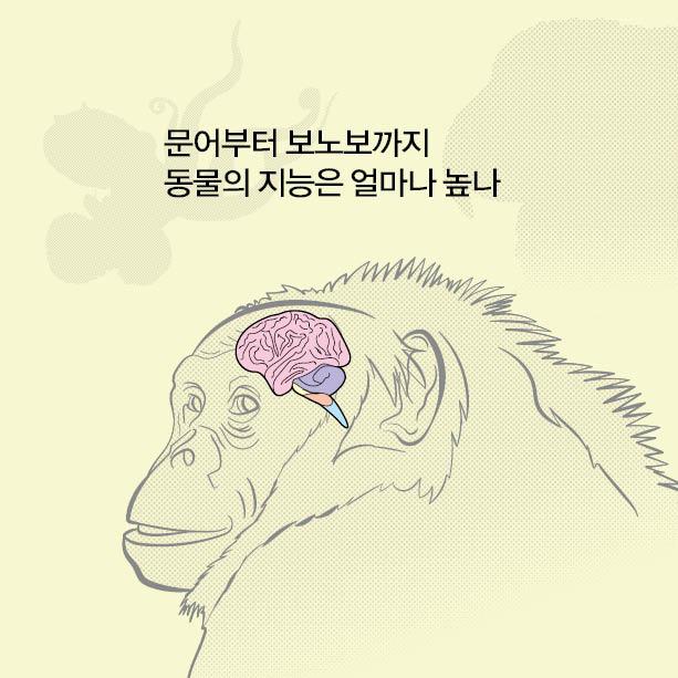 동물의 지능은 얼마나 높나