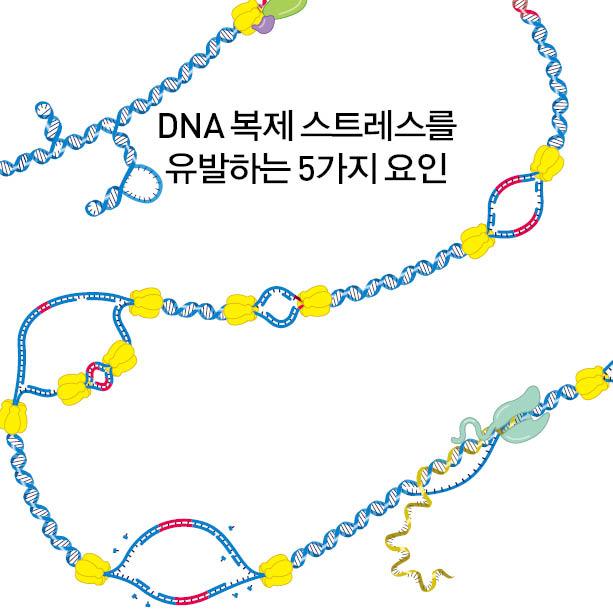 DNA 복제 스트레스를 유발하는 5가지 요인