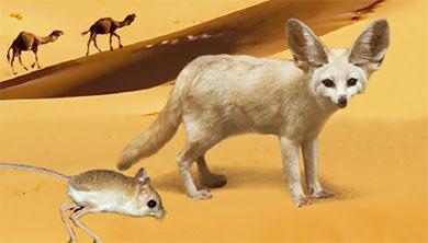 사막에 사는 특별한 생물