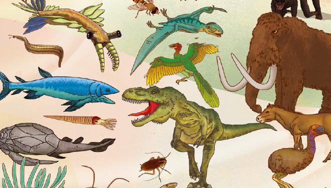 폭발적인 진화의 이유는?