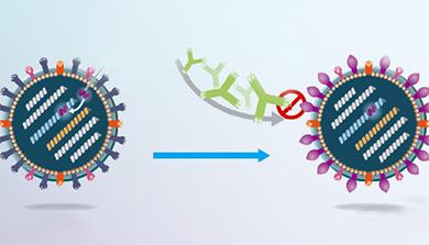 Part 2. 변신의 귀재, 인플루엔자의 똑똑한 생존전략