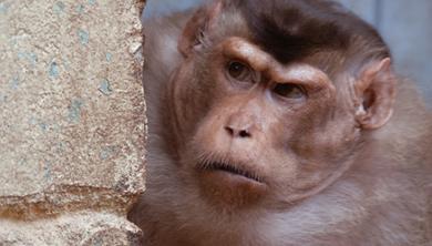 [수학뉴스] 원숭이 대장은  언제 바뀔까?