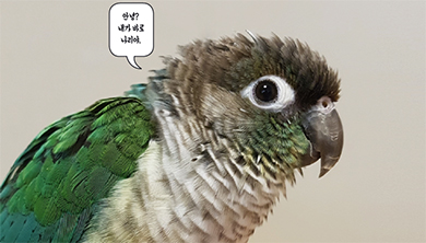 [Issue] 반려앵무새, 사이테스 신고에 도전하다