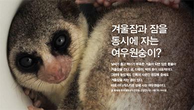 [Origin] 겨울잠과 잠을 동시에 자는 여우원숭이?