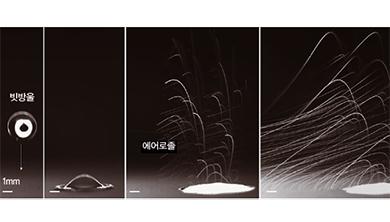 [과학뉴스] 봄비가 박테리아 퍼뜨린다?