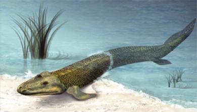 [과학뉴스] 눈 덕분에 육지로 올라온 고대 수중생물