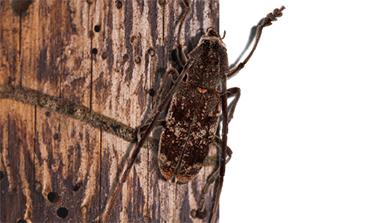 [Issue] 봄 산불, 해충이 막는다?