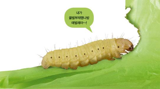 [Future] 새롭게 주목 받는 '환경 곤충', 플라스틱 먹는 애벌레