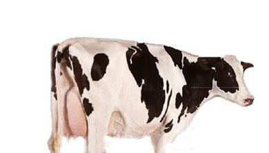 Part 3. [안내] 사람과 동물 모두를 위한 인공 음식