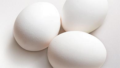 [Focus News] '살충제 계란' 공포, 계란 계속 먹어도 되나