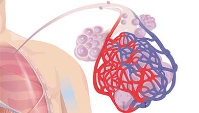 [Origin] 모세혈관 따라 10만km '건강 게이트키퍼' 모세혈관 총정리