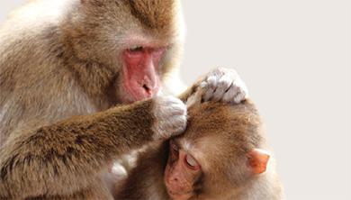 Part 2. 무리생활을 하는 동물의 게임이론