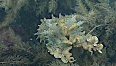 [과학뉴스] 오징어 위장술 모방한 신소재 개발