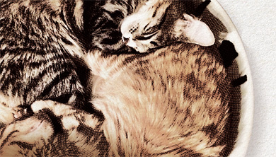 Part 4. [이그노벨상] 고양이는 고체일까, 액체일까?