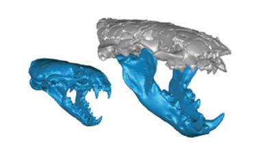 [과학뉴스] '귀염둥이' 수달, 수백만 년 전엔 무시무시한 포식자