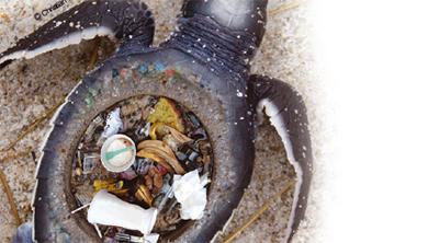 [현장취재①] 해양 생물의 가장 위험한 먹이, 플라스틱!