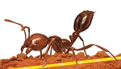 Part 1. 남미산 개미가 부산항에 나타났다?!
