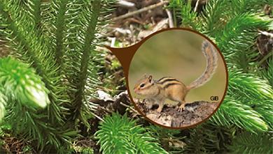 [식물 속 동물 찾기] 복슬복슬 꼬부랑, 다람쥐꼬리