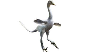 [과학뉴스] 백조 닮은 육식 공룡 있었다