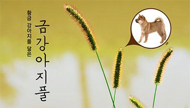 [식물 속 동물 찾기] 황금 강아지를 닮은 금강아지풀