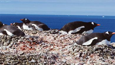 Part 2. 남극에 사는 별별 생물