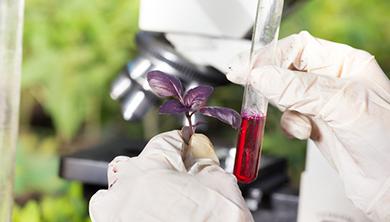 [과학뉴스] 잔류농약, 바이러스로 확인