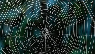 [과학뉴스] 강철보다 강한 거미줄의 비밀 풀렸다