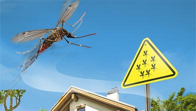 [Issue] 예년 보다 더운 여름, 모기 잘 물리는 동네는?