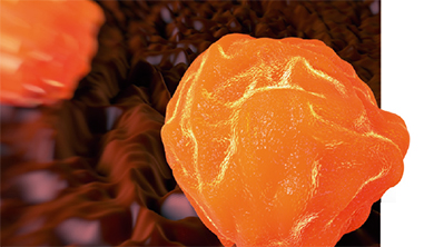 [Origin] 성체줄기세포의 세포 '리필' 능력은?