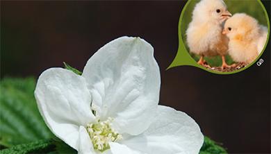[식물 속 동물 찾기] 병아리 꽃나무