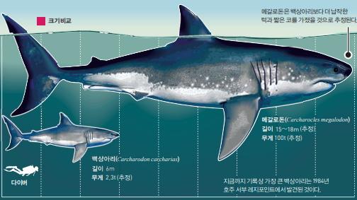 [과학뉴스] 메갈로돈 : 세상에서 가장 거대했던 고대상어