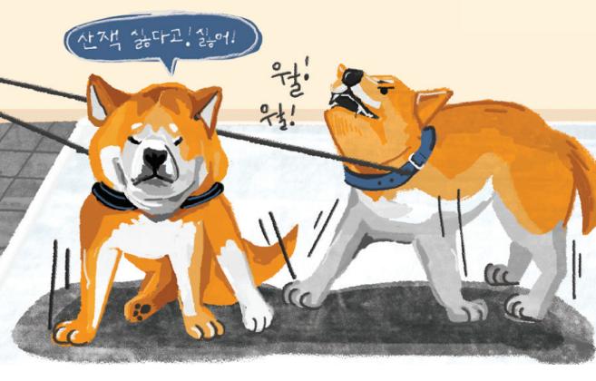 [Culture] 강아지가 무서워해서 산책을 못 나가요