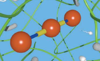 [과학뉴스] 정자는 젤리에서 어떻게 '수영'할까?