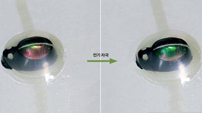 [과학뉴스] 카멜레온처럼 색 변하는 전고체 소재 개발