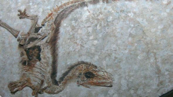 Part 2.깃털의 원조는 공룡